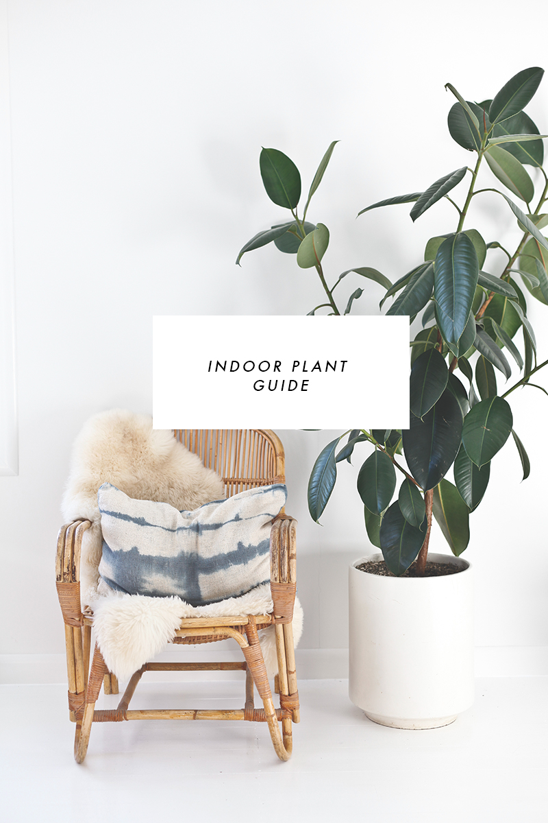 Indoor Plant Guide | Blackbird